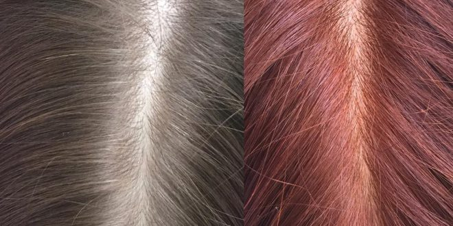 DIY natürliches Haar, das unter Verwendung Hennas färbt